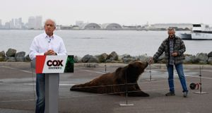Recall fever: more than just a bear and a TV star